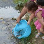 Acqua: Interconnessioni – Biodiversità – Vita
